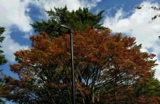 桧原湖の紅葉