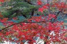 毘沙門沼(五色沼)の紅葉