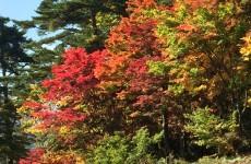 裏磐梯の紅葉(2)