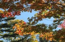 裏磐梯の紅葉(3)