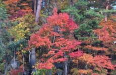 裏磐梯の紅葉(1)